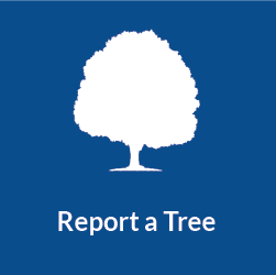 Report a Tree